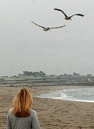karen-pelicans-fly-away 2