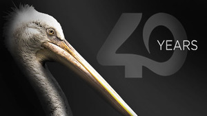 feature-40th-Pelican-front